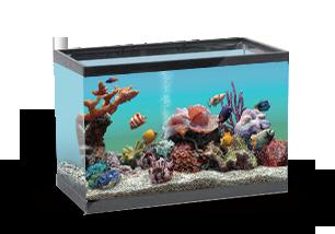 Морской-коралловый-2
