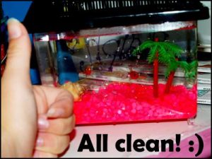 очистка аквариума